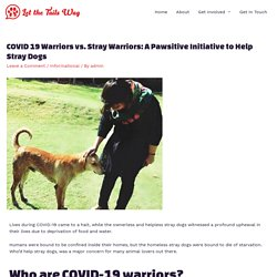 COVID 19 Warriors vs. Stray Warriors: A Pawsitive Initiative to Help Stray Dogs