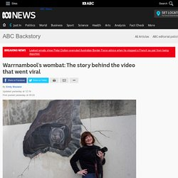 Warrnambool's wombat: The story behind the video that went viral - Regional - ABC News