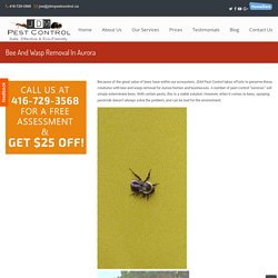 Bee And Wasp Removal In Aurora