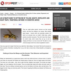 How to get rid of wasps: The best wasp traps, killer spray, and wasp repellents