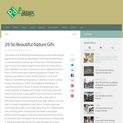 25 So Beautiful Nature Gifs