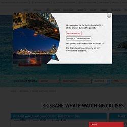 Whale Watching Cruises In Brisbane