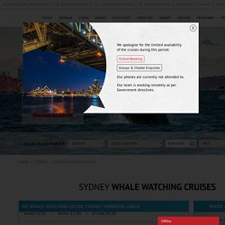 9 Best Whale Watching Cruises In Sydney