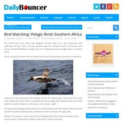 Bird Watching: Pelagic Birds Southern Africa