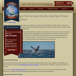 Whale Watching in the San Juan Islands: Getting to Know the Majestic Beauties