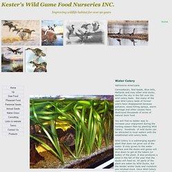 Water Celery