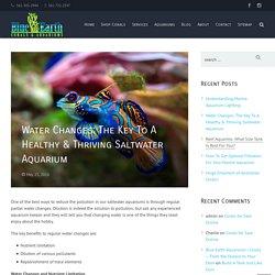 Blue Earth Corals and Aquarium