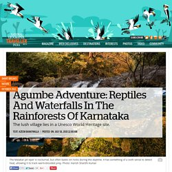 Agumbe Adventure: Reptiles And Waterfalls In The Rainforests Of Karnataka