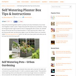 Self Watering Planter Box Tips & Instructions - Our Tips For