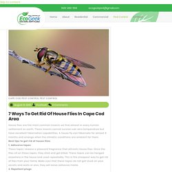 How to get rid of house flies naturally?