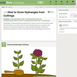 4 Ways to Grow Hydrangea from Cuttings