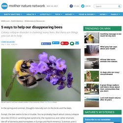 5 ways to help our disappearing bees
