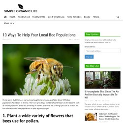 10 Ways To Help Your Local Bee Populations