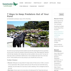 7 Ways to Keep Predators Out of Your Pond