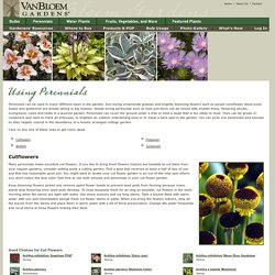 Ways to Use Perennials