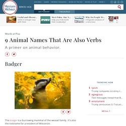 Ferret - 'Weasel,' 'Parrot,' and Other Animal Names That Are Verbs