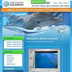Webcam #3: Winter, Panama, Hope