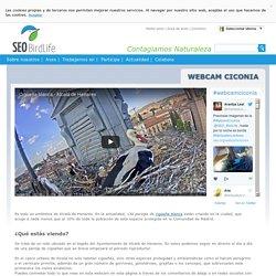 Webcam Ciconia