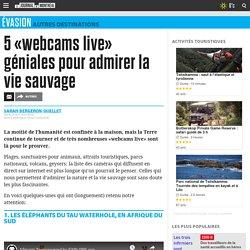 5 «webcams live» géniales pour admirer la vie sauvage