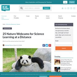 The Best Nature Webcams for Science Learning at a Distance