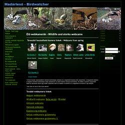 élő webkamerák állatokról