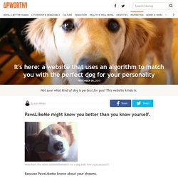 It's here: a website that uses an algorithm to match you with the perfect dog for your personality