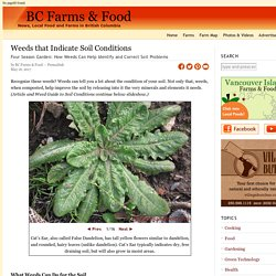 Weeds that Indicate Soil Conditions - BC Farms & Food
