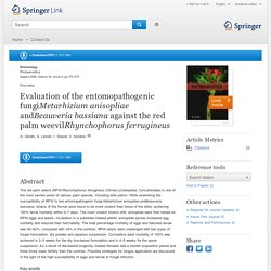 Evaluation of the entomopathogenic fungiMetarhizium anisopliae andBeauveria bassiana against the red palm weevilRhynchophorus ferrugineus