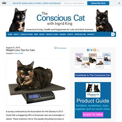 Weight Loss Tips for Cats - The Conscious Cat