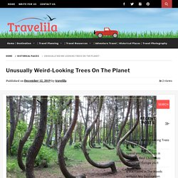 9 Weird Looking Trees - To See, Not To Unsee