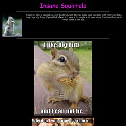 Weird Squirrels Page
