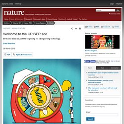 NATURE 09/03/16 Welcome to the CRISPR zoo - Birds and bees are just the beginning for a burgeoning technology.