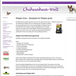 Welpen Club – Welpen Startpaket - Chihuahua Welt