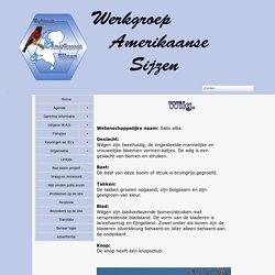 Werkgroep Amerikaanse Sijzen - Wilg
