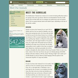 Meet the Zoo's Western Lowland Gorillas