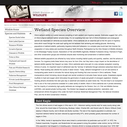 Wetland Species Overview