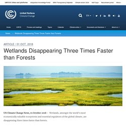 Wetlands Disappearing Three Times Faster than Forests