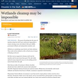 Wetlands cleanup may be impossible - Disaster in the Gulf
