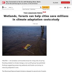 Wetlands, forests can help cities save millions in climate adaptation costs:study