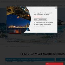 Best Whale Watching Cruises And Hervey Bay Whale Watching Tours