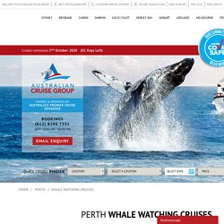 Whale Watching Cruises In Perth