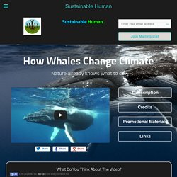 How Whales Change Climate - Sustainable Human