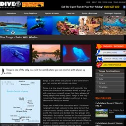 Swim with whales, Tonga Diving, Swimming with whales in Tonga, Dive Adventures Tonga, Whale swim Tonga