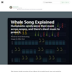 Whales synchronize their songs across oceans, and there's sheet music to prove it.