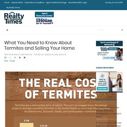 What You Need to Know About Termites and Selling Your Home
