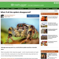 what-if-all-the-spiders-disappeared