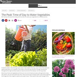 What's the Best Time of Day to Water Vegetables?