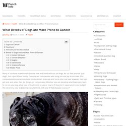What Breeds of Dogs are More Prone to Cancer