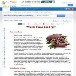 What Is Cacao Good For? - Mercola.com