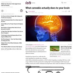 What cannabis actually does to your brain